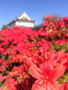長岡京市の理容店 ヘアーサロンデュオ 5月の定休日
