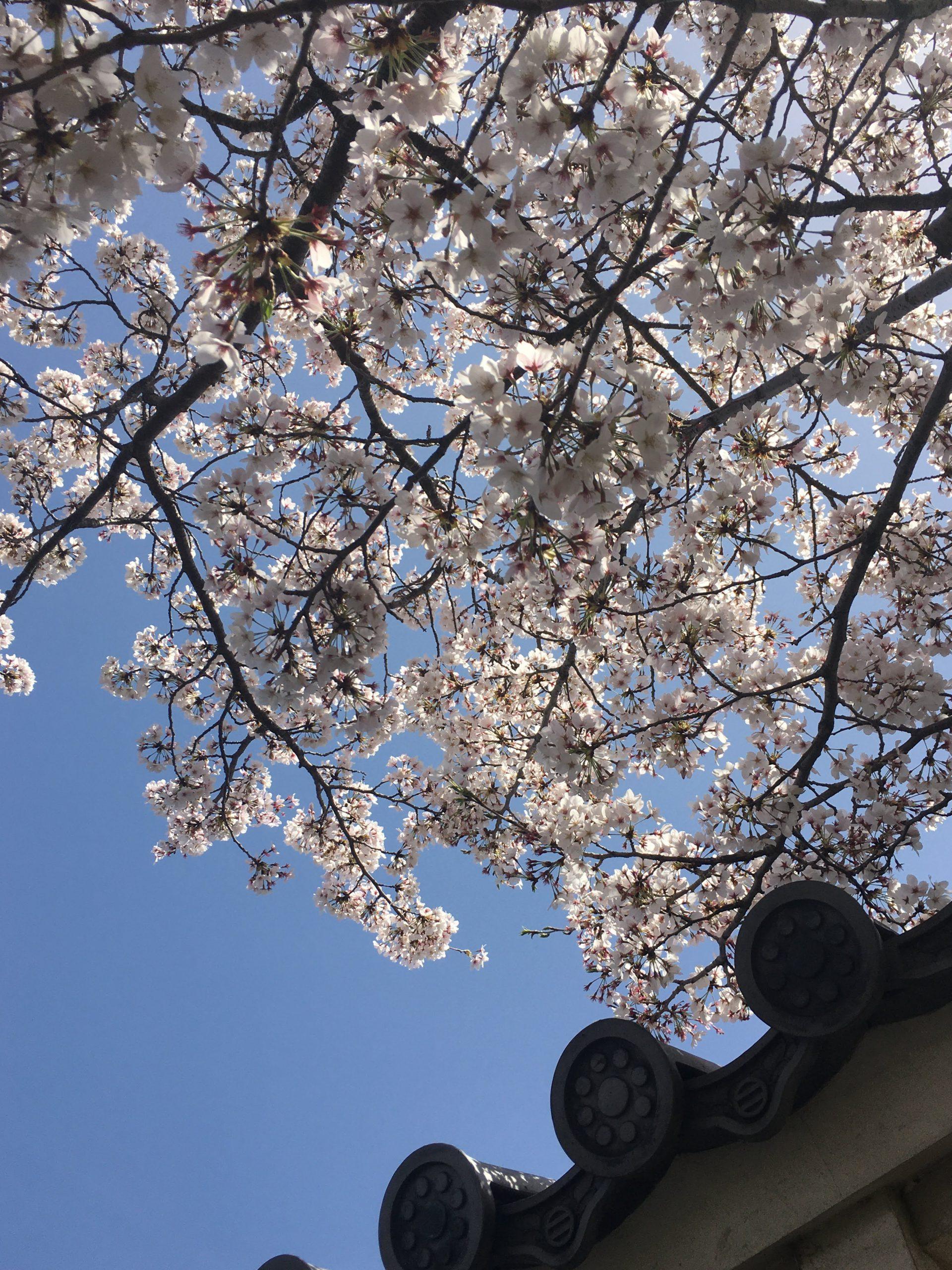 長岡京市の理容店 ヘアーサロンデュオ 2021年4月